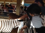 Here's my daughter petting a zebra.